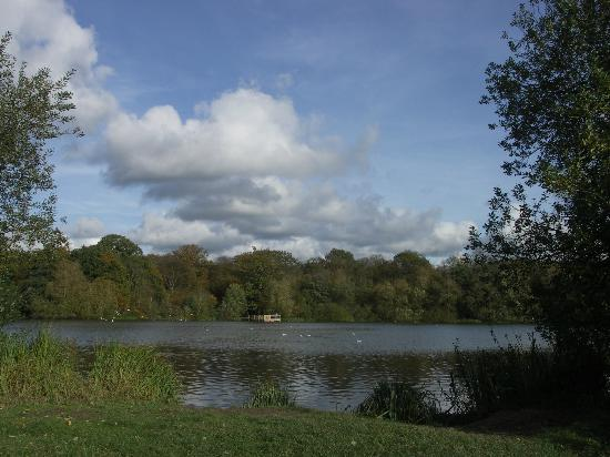 Hatfield Forest Nature Reserve: the lake