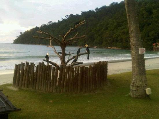 Pangkor Island Beach Resort: Hornbills