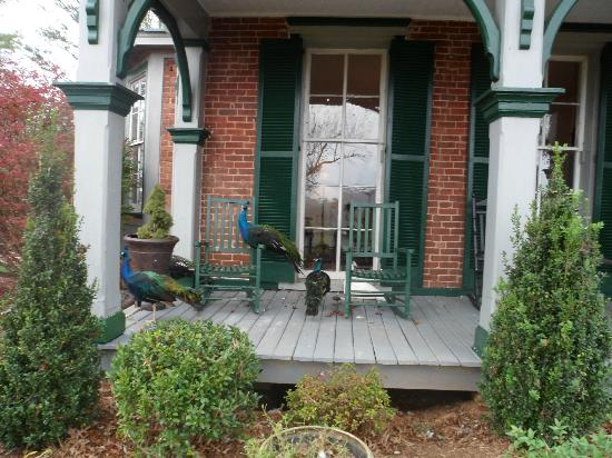 Fairview Bed and Breakfast Estate: Peacocks are magnificient