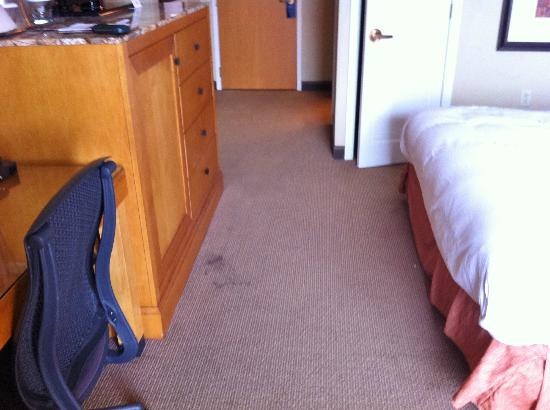 Hilton University of Florida Conference Center Gainesville: Stained, dirty carpet.