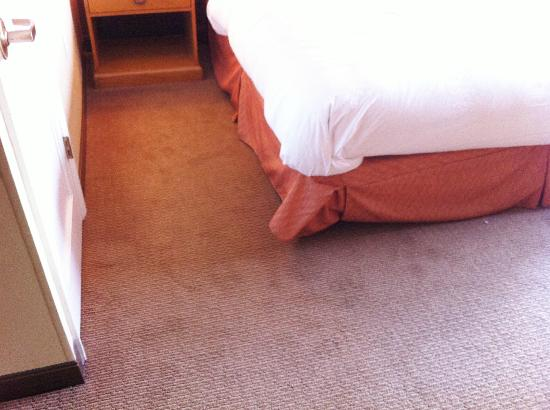 Hilton University of Florida Conference Center Gainesville: Dirty carpet between bed and closet door.