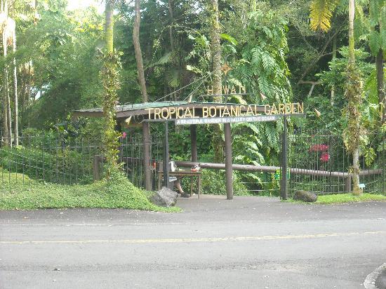 Hawaii Tropical Botanical Garden: PMG