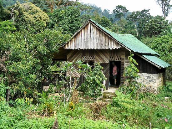 Linnea Resort Tangkahan : houten cottage