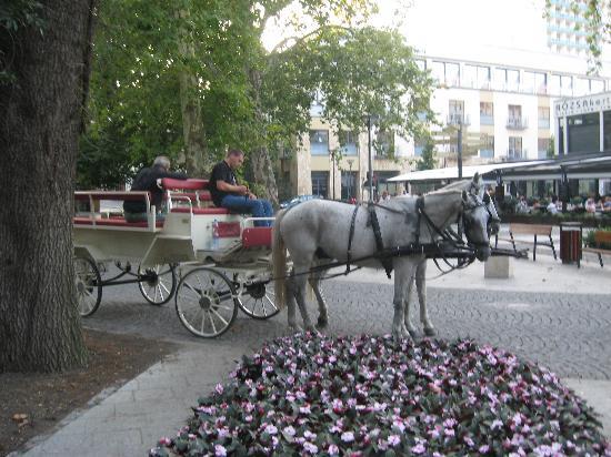 Hotel Erzsebet : Skwer przed wejściem do parku