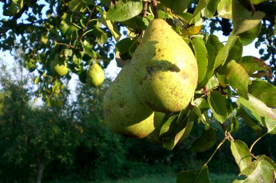 Landhaus Hinterberg: Obst vom eigenen Garten