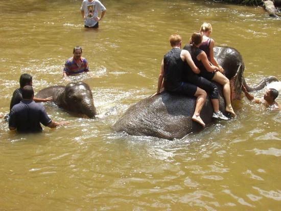 Nash My Services - Private Day Tours : Elephant Sanctuary