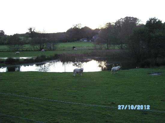 Knowle Farm: Views from our window