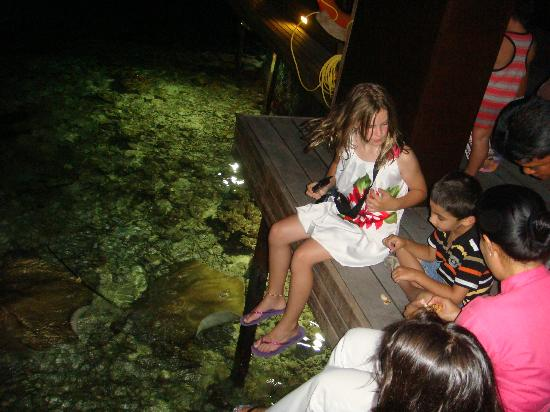 Lily Beach Resort & Spa: fish feeding