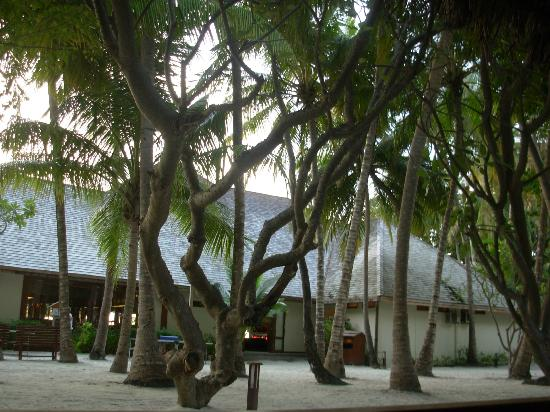 Meeru Island Resort & Spa: Grounds
