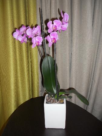 Pullman Montpellier Centre: Véritable orchidée