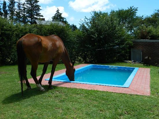 La Farfalla Posada - Hostel: Con sed en pleno verano
