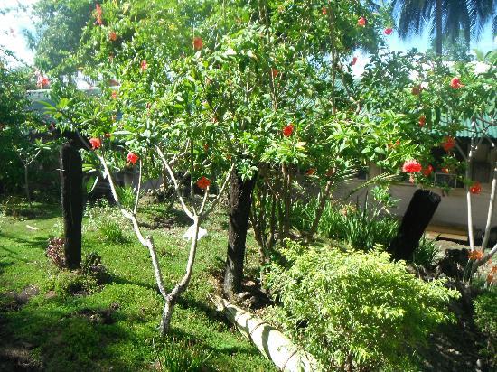King Solomon Hotel: Landscaped gardens 
