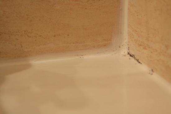 Hotel Zenit Borrell: bathroom mould 2