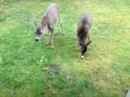 Whale's Tail Guest Suites: Momma and baby deer having lunch