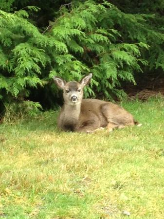 Whale's Tail Guest Suites: Baby deer waiting for lunchtime