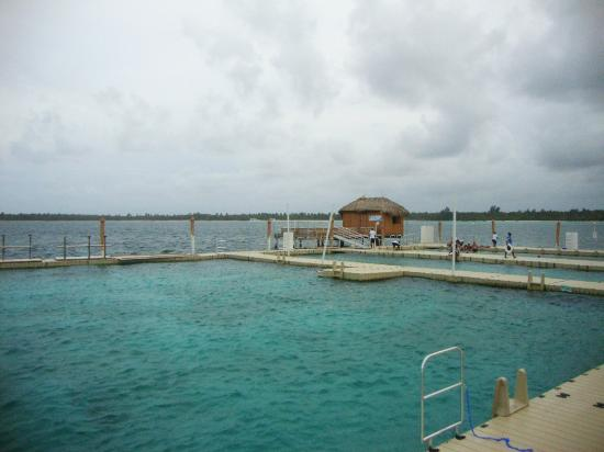 Ocean Adventures Stingray Bay Caribbean Festival : The Platform