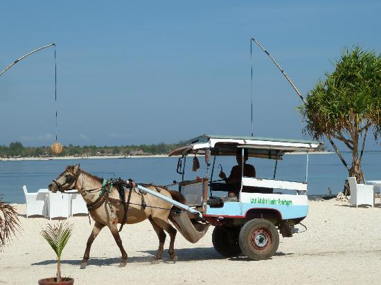 MAHAMAYA Gili Meno: Horse and cart going past at lunch time