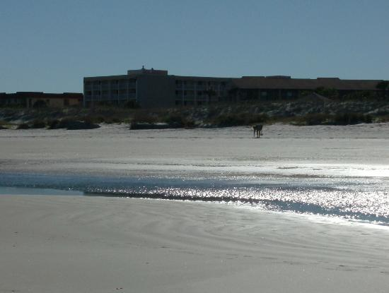 Holiday Isle Oceanfront Resort: Northside of hotel, note the 4th and 5th floor nearer to the beach for a better view