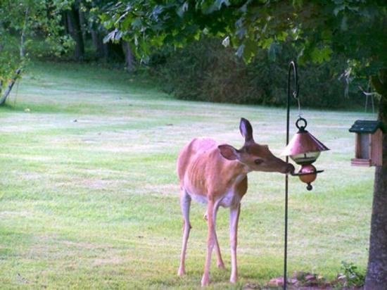 Hidden Lake Bed and Breakfast: One of our backyard friends