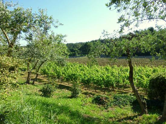 Domaine Les Roullets : vineyard