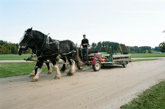 Working Horses on Shelburne Farms