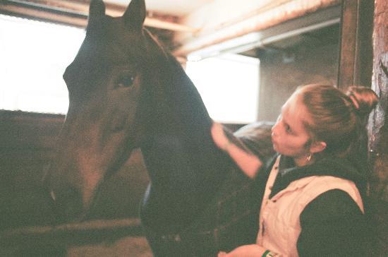 UVM Morgan Horse Farm: Morgan Horse and Volunteer at the Farm