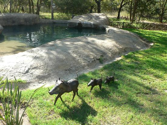 Pezulu Tree House Game Lodge: Swimming hole. Very refreshing!