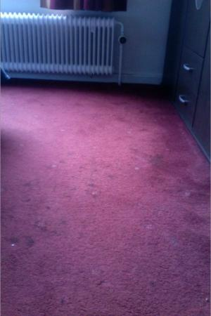 Hotel Windsor: carpet stains