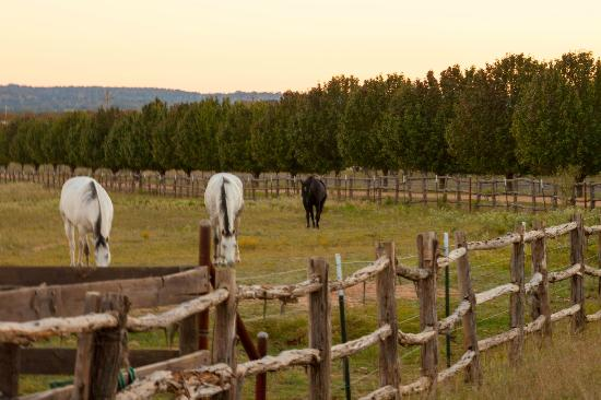 Spotted Pony Ranch: Horses Grazing