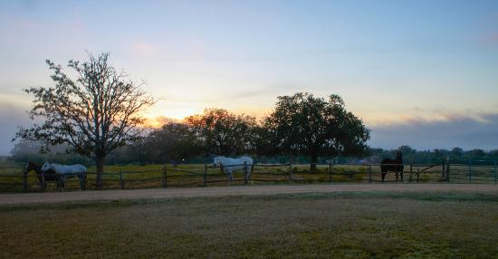 Spotted Pony Ranch: Beautiful Sunrises