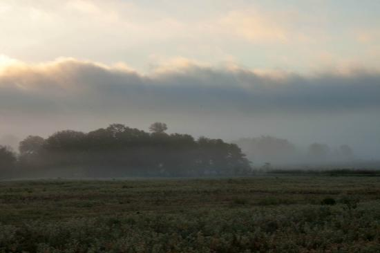Spotted Pony Ranch: Foggy mornings added to the peacefulness!