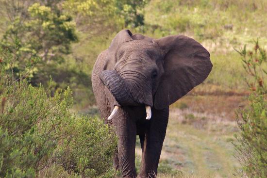 Gondwana Game Reserve照片
