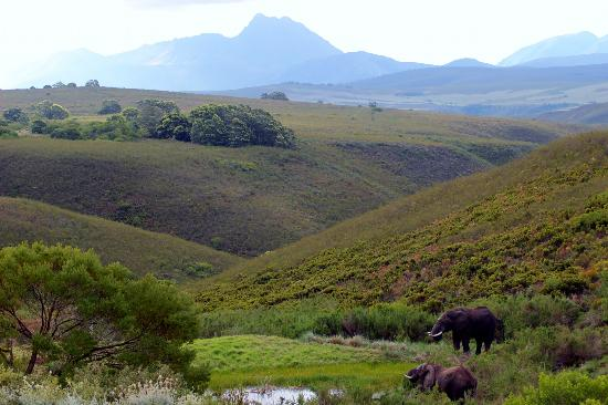 Gondwana Game Reserve: Elephants playing in a pond