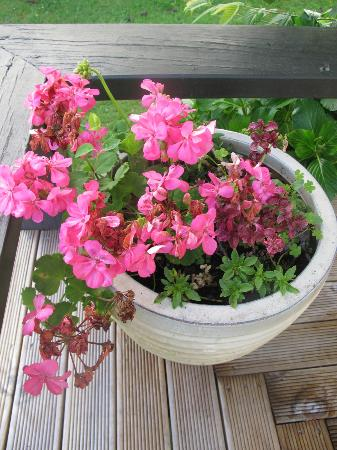 Pagoda Lodge : Geraniums and flowers decorate each area