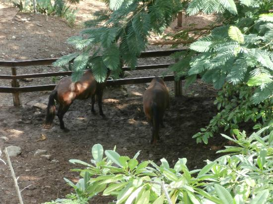 SeaGate Hotel: Horses at the SeaGate
