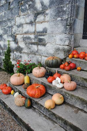Chateau de la Motte : Pumpkins from the garden