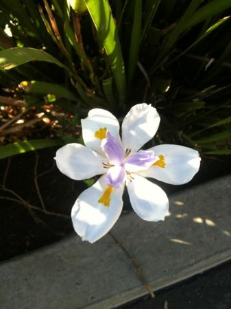 Casa Via Mar Inn and Tennis Club: blooming outside our room
