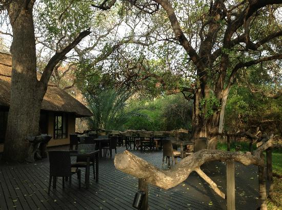 Royal Tree Lodge: Rear deck of main lodge. Dinner here at night, complete with candles and fine dining settings.