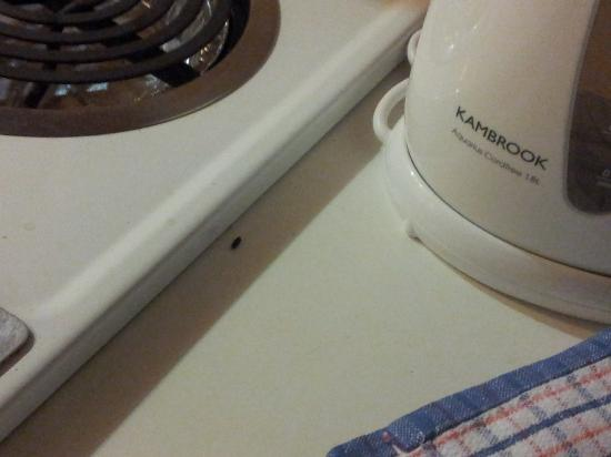 Northpoint Holiday Apartments: mouse droppings on kitchen bench