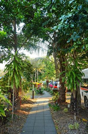 Cairns Holiday Park: lush grounds