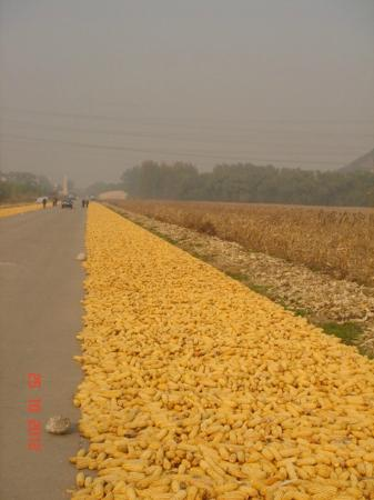 China Aviation Museum: Locals drying corn on entrance(in distance) road