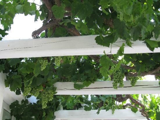 Porto Fira Suites: Who has grapes hanging from your private balcony?!