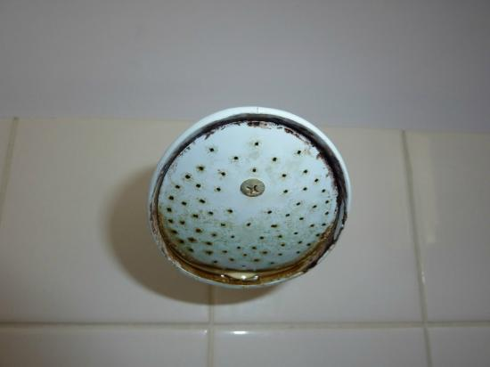 Augusta Hotel Motel : Filthy dirty shower head