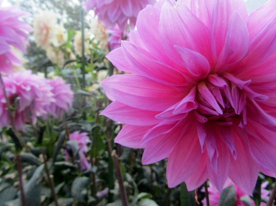 Phipps Conservatory and Botanical Gardens: .