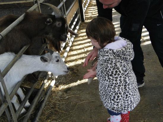 Mabie Farm Park: Feeding the goats