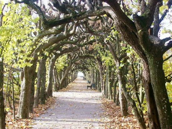 Dachau Palace and Court Garden: Path formed by trees