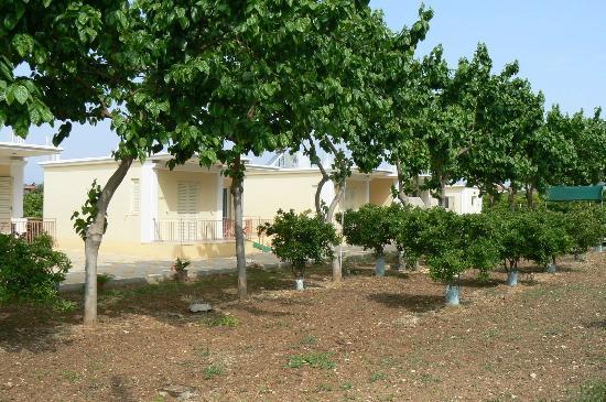 Anesis Villas: Villas omgeven door manderijnenbomen