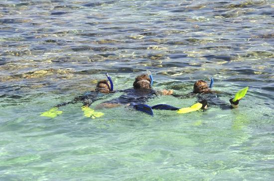 Studland Sea School: family snorkelling sessions