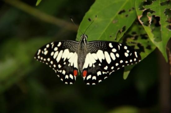 Butterfly Park - Picture of Banteay Srey Butterfly Centre ...