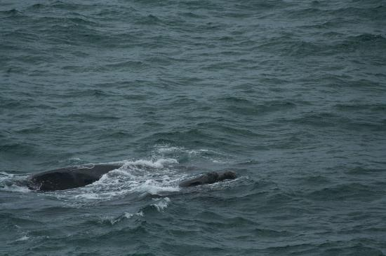 Cliff Cottage: Whales at Hermanus